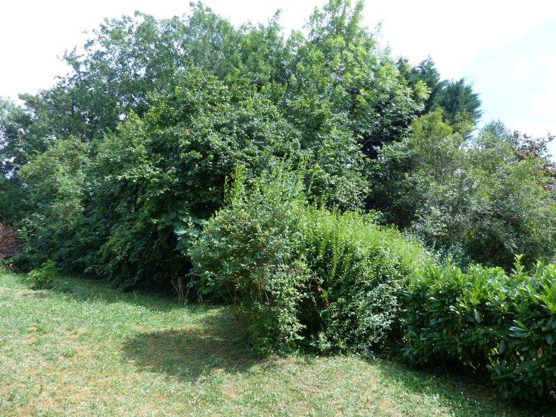 Le jardin, derrière le cabinet